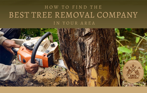 Choosing the Best Hillsborough NJ Tree Removal Company