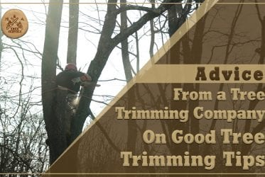 Advice From a Bedminster NJ Tree Trimming Company On Good Tree Trimming Tips