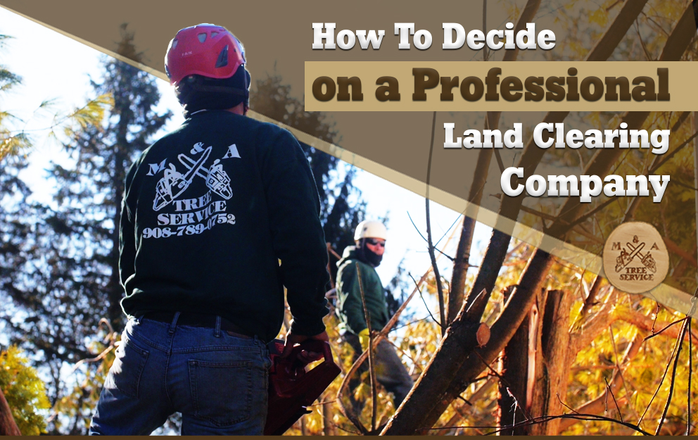 Looking For A Professional Branchburg NJ Land Clearing Company? This is How to Make Your Decision