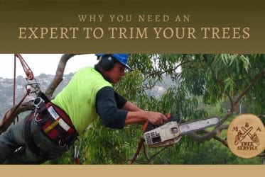 Why You Need a Warren NJ Tree Trimming Company for Your Project