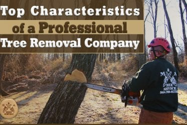Characteristics of a Professional Montgomery NJ Tree Removal Company You Should Lookout For