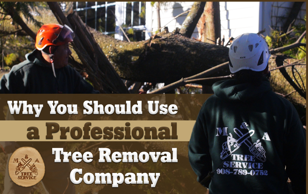 Why You Should Use A Professional Franklin Township, NJ Tree Removal Company